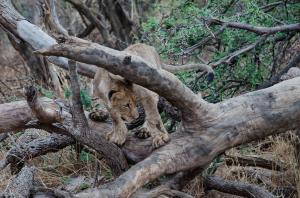 Post-Processed File Matata Cub On Branch -48