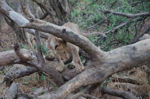 Raw File Matata Cub On Branch -48