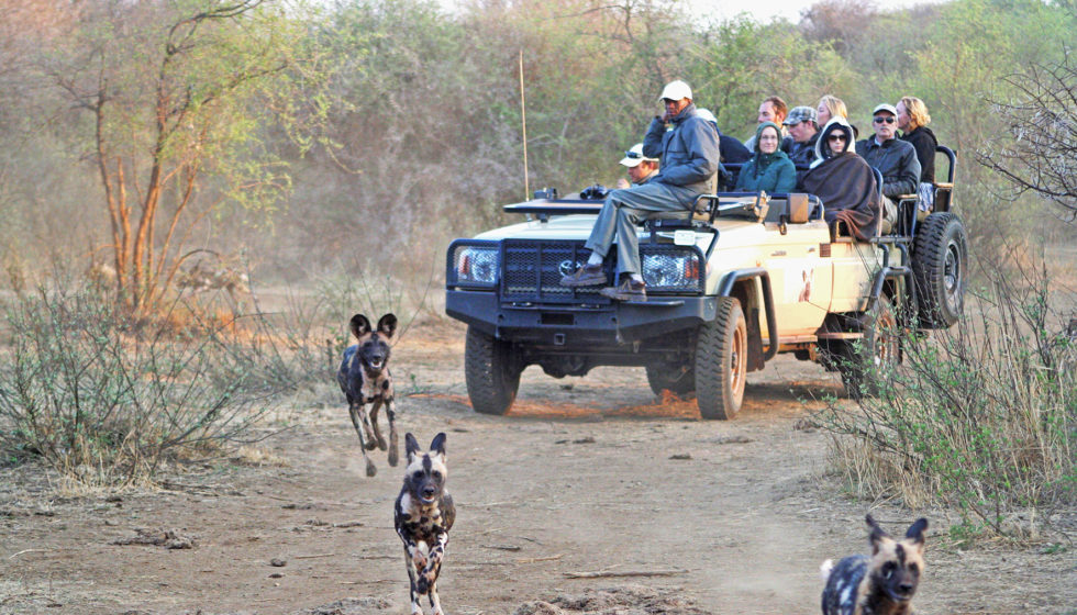 madikwe hills game drive with wild dogs